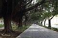 深圳市深南大道 园博园段 Shen Nan Da Dao - panoramio.jpg