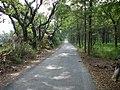 虎山農場的小路 - panoramio.jpg