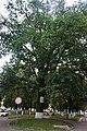 07-102-5001, дуб Володимир-Волинський.jpg