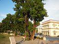 08635jfProvincial Capitol Boulevard San Fernando City Pampangafvf 03.jpg