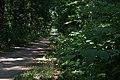 130707 DEURNESKANAAL MEIJEL Fallopia Japonica - Japanse Duizendknoop DSC 7458.jpg