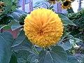 13082011(004)Kherson flowers.jpg