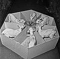 1960 Nurserie à Brouessy Cliché Jean-Joseph weber-1.jpg