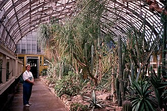 Garfield Park Conservatory - Garfield Park Conservatory Cactus Room (now Desert House), June 15, 1997