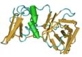 1BR9 HumanTissueInhibitorOfMetalloproteinase-2.png