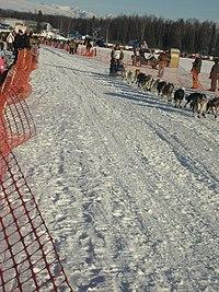 2008 Iditarod Willow (2312159431).jpg