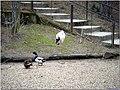 2009 03 15 Veszprém 505 (51190582387).jpg