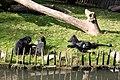20101017 Zoo de Lille (18).jpg