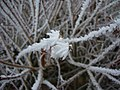2011-01-31 Frost Berlin 05.jpg
