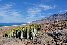 canary islands wikipedia