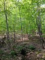 2013-05-06 18 42 11 Wide view of a spring along the Orange Trail in Point Mountain Reservation.jpg