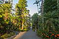 2015-09-13 Royal Botanic Gardens, Sydney - Palm Groove.jpg
