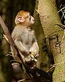 2016-04-21 13-53-24 montagne-des-singes.jpg