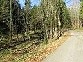 2017-11-24 (166) Haltgraben - Grüntalkogelhütte.jpg