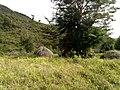 20170904 Papouasie Baliem valley 6.jpg