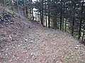 2018-01-28 (107) Ending forest road at Haltgraben, border area between Frankenfels at Kirchberg an der Pielach.jpg