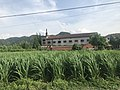 201805 Manchurian wild rice cropped in Langya.jpg