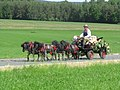 21te Rammenauer Schlossrundfahrt der Pferdegespanne (138).jpg