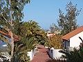 35649 Parque Holandés, Las Palmas, Spain - panoramio (11).jpg