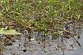 3 Baby Jesus Birds (8308710953).jpg