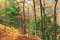 3 Ponds Trail (7) (15614654056).jpg