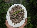 4087Ants Common houseflies foods delicacies of Bulacan 16.jpg
