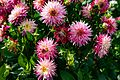 ADD SOME COLOUR TO YOUR LIFE (FLOWERS IN A PUBLIC PARK)-120112 (28650123944).jpg