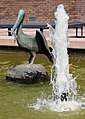 A Pelicans bath (Assignment 1.5) (18065774765).jpg
