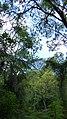 A Serra do Japi também representa uma das últimas grandes áreas de floresta contínua do Estado de São Paulo e é o testemunho de uma flora e fauna exuberante que existiam em grande parte na região sudeste - panoramio.jpg