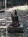 A baboon in the zoo located in Calabar, Cross River state.jpg