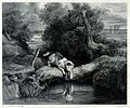 A dog sitting on a tree trunk that bridges a river gazing at Wellcome V0020842.jpg
