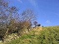 A dyke and scrub on Quarry Hill - geograph.org.uk - 608953.jpg