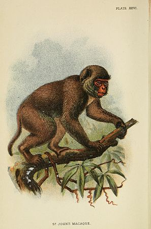 A hand-book to the primates (Plate XXVI) (6901557114).jpg