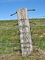 A much used old fence post - geograph.org.uk - 724676.jpg