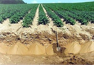 Land degradation - Potato field with soil erosion