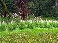 A scene of botanical garden Ooty 16.jpg