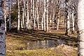 A springtime - panoramio (3).jpg