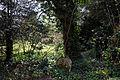 Abbess Roding - St Edmund's Church - Essex England - west churchyard woodland walk 01.jpg
