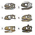 Abelisauridae skull comparison.JPG