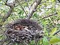 Abondoned Nest.jpg