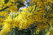 被子植物 | Fairy Lake Botanical Garden Flora
