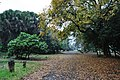 Acharya Jagadish Chandra Bose Indian Botanic Garden - Howrah 2011-02-20 1581.JPG