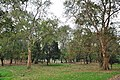 Acharya Jagadish Chandra Bose Indian Botanic Garden - Howrah 2011-02-20 1648.JPG