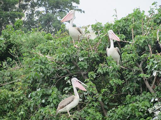 Adyar-Tholkappiya-Poonga-Park-Chennai-India-2