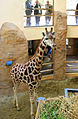 African Savannah house, Zoo Jihlava, stable 3.jpg