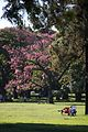 Afternoon in the park (2658867434).jpg