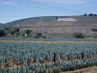 Agave fields hill.jpg