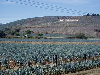 Tequila - Fields that form part of the UNESCO World Heritage Site Agave Landscape and Ancient Industrial Facilities of Tequila