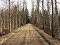 Agrs pavasaris-dūņu ceļš - panoramio.jpg