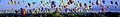 Albuquerque balloon fiesta wikivoyage banner.jpg